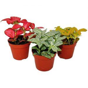 Plantas para terrario eterno