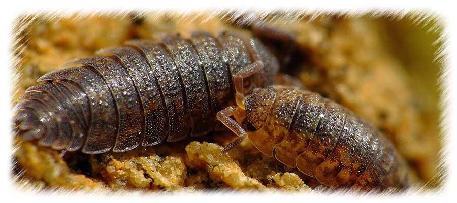 terrario insectos