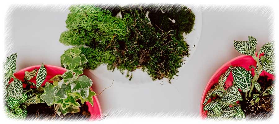 Terrario Plantas