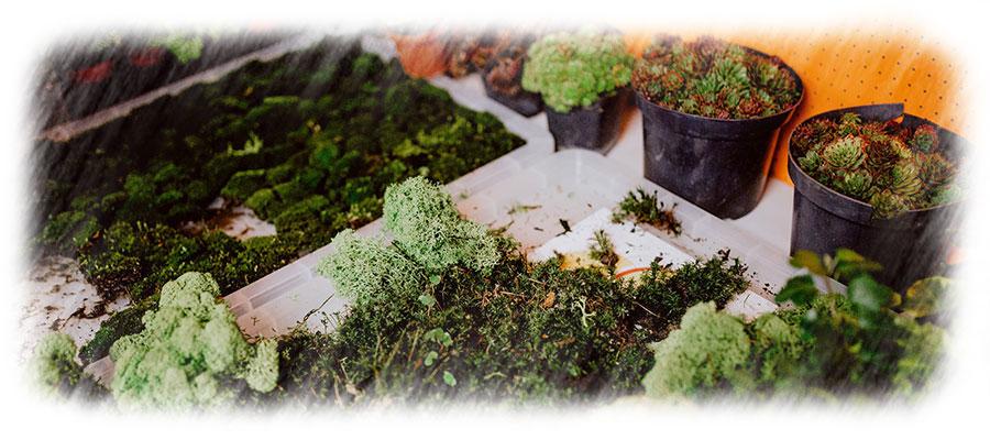 Terrario Autosustentable ejemplos