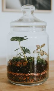 Terrario autosustentable carcteristicas