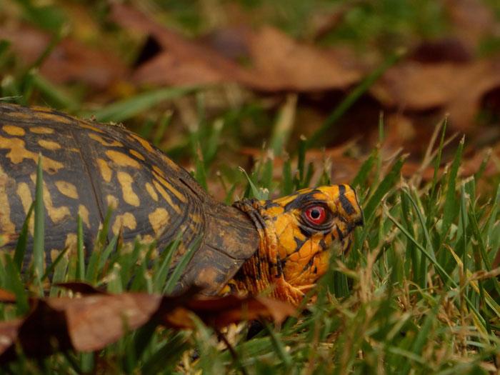 Comprar terrario tortuga tierra