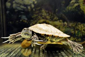 Aquaterrario para tortuga