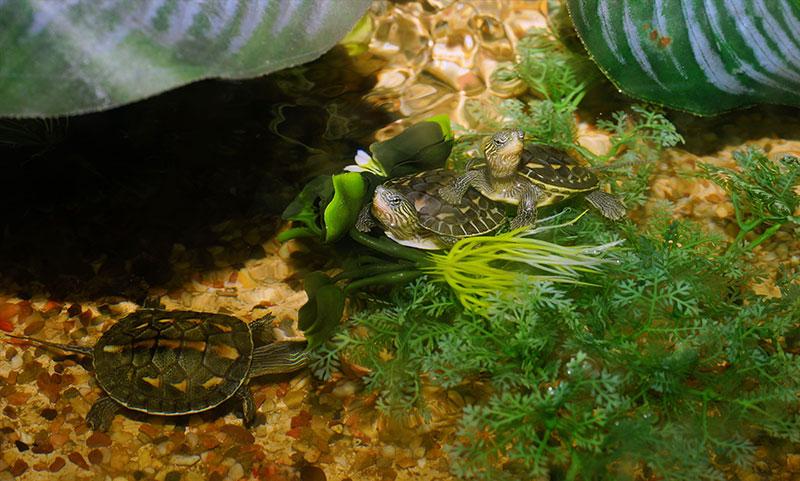 Acuario para tortugas